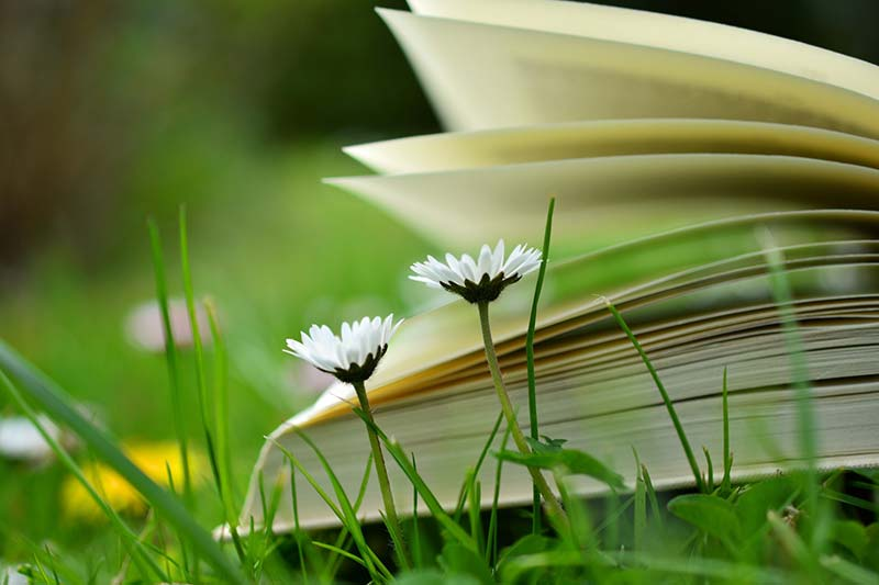 5 Ways to Re-energise Your Backlist Books